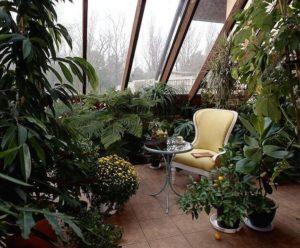 отдых в зимнем саду